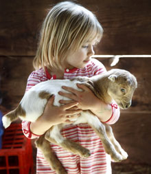 Young girl with lamb in arms, Living Wisdom School, Nevada City, California